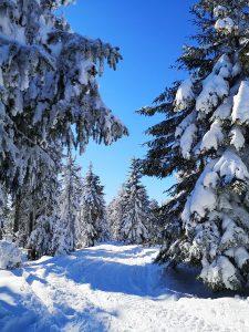 szlak, las, zima, Beskidy