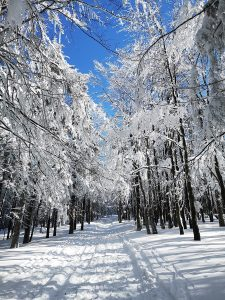zima, las, śnieg, drzewa, Beskid Żywiecki