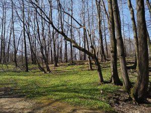 Dolina Gościnna, drzewa, Bielsko-Biała