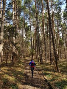 szlak, las, góry, drzewa, Beskid Sądecki